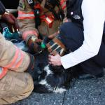 Portland Fire & Rescue Resuscitating a Cat