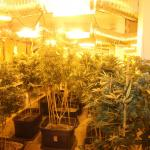 Marijuana growing operation in Boring Oregon - Lights